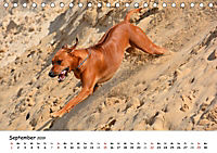 Lustige Strandhunde (Tischkalender 2019 DIN A5 quer) - Produktdetailbild 9