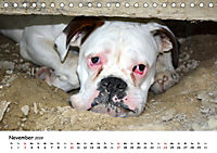 Lustige Strandhunde (Tischkalender 2019 DIN A5 quer) - Produktdetailbild 11