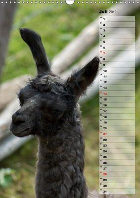Lustige und gesellige Lamas 2019 Wandkalender 2019 DIN A3