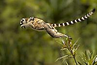 Madagaskar - Ein geheimnisvolles Wunder der Natur - Produktdetailbild 1