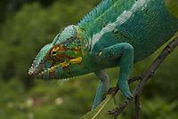 Madagaskar - Ein geheimnisvolles Wunder der Natur - Produktdetailbild 3