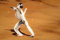 Madagaskar - Ein geheimnisvolles Wunder der Natur - Produktdetailbild 2