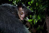 Madagaskar - Ein geheimnisvolles Wunder der Natur - Produktdetailbild 5