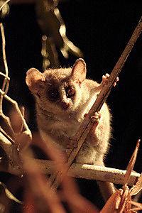 Madagaskar - Ein geheimnisvolles Wunder der Natur - Produktdetailbild 6