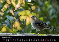 Madeira - Die Blumeninsel (Wandkalender 2019 DIN A4 quer) - Produktdetailbild 12