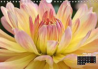 Magical Dahlias (Wall Calendar 2019 DIN A4 Landscape) - Produktdetailbild 7