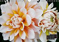 Magical Dahlias (Wall Calendar 2019 DIN A4 Landscape) - Produktdetailbild 5