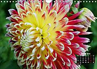 Magical Dahlias (Wall Calendar 2019 DIN A4 Landscape) - Produktdetailbild 4