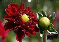 Magical Dahlias (Wall Calendar 2019 DIN A4 Landscape) - Produktdetailbild 2