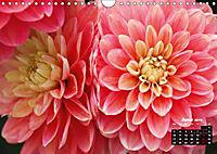 Magical Dahlias (Wall Calendar 2019 DIN A4 Landscape) - Produktdetailbild 6