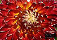 Magical Dahlias (Wall Calendar 2019 DIN A4 Landscape) - Produktdetailbild 9