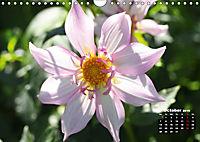 Magical Dahlias (Wall Calendar 2019 DIN A4 Landscape) - Produktdetailbild 10