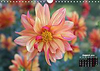Magical Dahlias (Wall Calendar 2019 DIN A4 Landscape) - Produktdetailbild 8