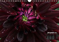 Magical Dahlias (Wall Calendar 2019 DIN A4 Landscape) - Produktdetailbild 11