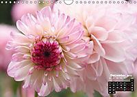 Magical Dahlias (Wall Calendar 2019 DIN A4 Landscape) - Produktdetailbild 12