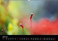 Magischer Wald (Wandkalender 2019 DIN A2 quer) - Produktdetailbild 6