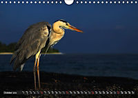 MALDIVES - UK Version (Wall Calendar 2019 DIN A4 Landscape) - Produktdetailbild 10