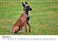 Malinois - Wahnsinn auf vier Pfoten (Tischkalender 2019 DIN A5 quer) - Produktdetailbild 11