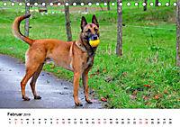 Malinois - Wahnsinn auf vier Pfoten (Tischkalender 2019 DIN A5 quer) - Produktdetailbild 2