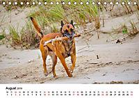 Malinois - Wahnsinn auf vier Pfoten (Tischkalender 2019 DIN A5 quer) - Produktdetailbild 8