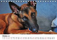 Malinois - Wahnsinn auf vier Pfoten (Tischkalender 2019 DIN A5 quer) - Produktdetailbild 10