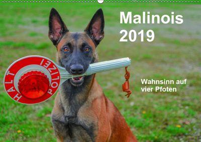 Malinois - Wahnsinn auf vier Pfoten (Wandkalender 2019 DIN A2 quer), Alexander Trocha
