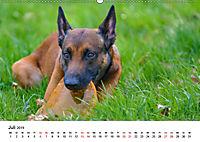 Malinois - Wahnsinn auf vier Pfoten (Wandkalender 2019 DIN A2 quer) - Produktdetailbild 7