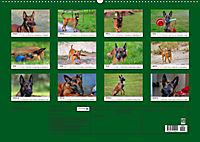 Malinois - Wahnsinn auf vier Pfoten (Wandkalender 2019 DIN A2 quer) - Produktdetailbild 13