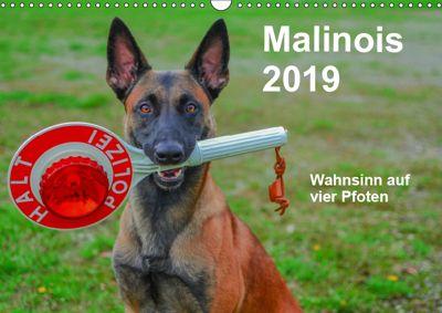 Malinois - Wahnsinn auf vier Pfoten (Wandkalender 2019 DIN A3 quer), Alexander Trocha