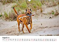 Malinois - Wahnsinn auf vier Pfoten (Wandkalender 2019 DIN A3 quer) - Produktdetailbild 8