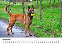 Malinois - Wahnsinn auf vier Pfoten (Wandkalender 2019 DIN A3 quer) - Produktdetailbild 2
