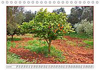 Mallorca, die reizvolle Sonneninsel (Tischkalender 2019 DIN A5 quer) - Produktdetailbild 7