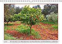 Mallorca, die reizvolle Sonneninsel (Wandkalender 2019 DIN A4 quer) - Produktdetailbild 7