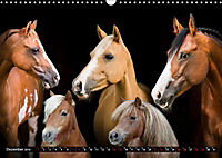 Malu Schumacher Mein Leben ist (k)ein Ponyhof ! (Wandkalender 2019 DIN A3 quer) - Produktdetailbild 12