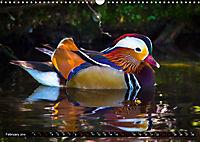 Marvellous Mandarins (Wall Calendar 2019 DIN A3 Landscape) - Produktdetailbild 2