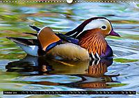 Marvellous Mandarins (Wall Calendar 2019 DIN A3 Landscape) - Produktdetailbild 10