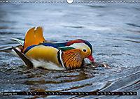 Marvellous Mandarins (Wall Calendar 2019 DIN A3 Landscape) - Produktdetailbild 1