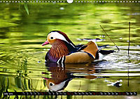 Marvellous Mandarins (Wall Calendar 2019 DIN A3 Landscape) - Produktdetailbild 7