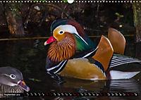 Marvellous Mandarins (Wall Calendar 2019 DIN A3 Landscape) - Produktdetailbild 9