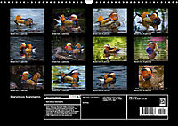 Marvellous Mandarins (Wall Calendar 2019 DIN A3 Landscape) - Produktdetailbild 13
