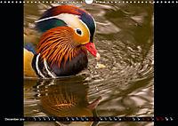 Marvellous Mandarins (Wall Calendar 2019 DIN A3 Landscape) - Produktdetailbild 12