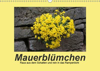 Mauerblümchen - Raus aus dem Schatten und rein in das Rampenlicht (Wandkalender 2019 DIN A3 quer), Angelika Keller