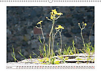Mauerblümchen - Raus aus dem Schatten und rein in das Rampenlicht (Wandkalender 2019 DIN A3 quer) - Produktdetailbild 6