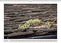 Mauerblümchen - Raus aus dem Schatten und rein in das Rampenlicht (Wandkalender 2019 DIN A3 quer) - Produktdetailbild 1