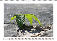 Mauerblümchen - Raus aus dem Schatten und rein in das Rampenlicht (Wandkalender 2019 DIN A3 quer) - Produktdetailbild 10