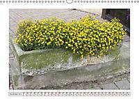 Mauerblümchen - Raus aus dem Schatten und rein in das Rampenlicht (Wandkalender 2019 DIN A3 quer) - Produktdetailbild 11