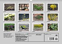 Mauerblümchen - Raus aus dem Schatten und rein in das Rampenlicht (Wandkalender 2019 DIN A3 quer) - Produktdetailbild 13