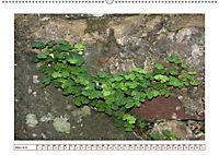 Mauerblümchen - Raus aus dem Schatten und rein in das Rampenlicht (Wandkalender 2019 DIN A2 quer) - Produktdetailbild 3