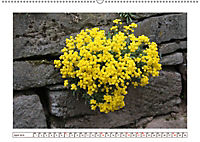 Mauerblümchen - Raus aus dem Schatten und rein in das Rampenlicht (Wandkalender 2019 DIN A2 quer) - Produktdetailbild 4