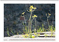 Mauerblümchen - Raus aus dem Schatten und rein in das Rampenlicht (Wandkalender 2019 DIN A2 quer) - Produktdetailbild 6